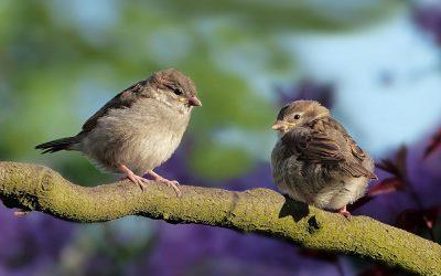 Vogel-Rätsel